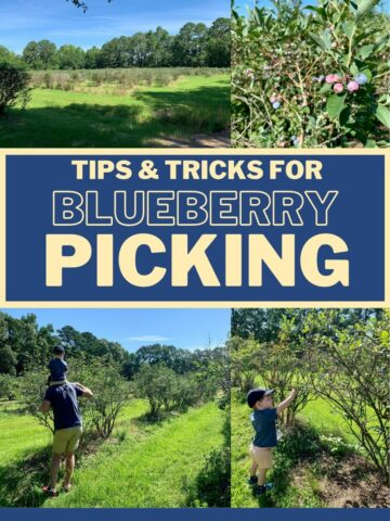 tips and tricks for blueberry picking with kids toddlers and babies